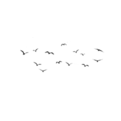 vogelschwarm freetoedit