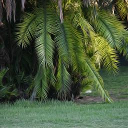 backlight naturephotography oilpaintingeffect focuseffect nature
