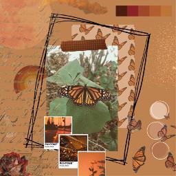 freetoedit butterflyeffect butterflyaesthetic butterfly butterflies