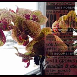 snowday orchids quotesandsayings myphotographs layers freetoedit