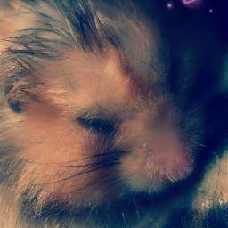 naturephotography petsandanimals hamster lovely cute