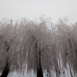 myphotography winter freetoedit