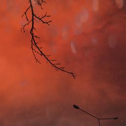 madewithpicsart tree streetlight winter
