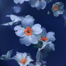nature flower adjusttool outandabout lensflare freetoedit