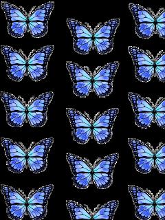butterfly butterflies background vsco vscobackground freetoedit