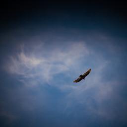 freetoedit bluesky putabirdonit wings blue pctheblueabove theblueabove