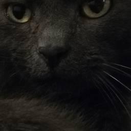 cats catlovers cat catsofpicsart catphotography
