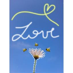 freetoedit fondosdepantalla love flor margarita