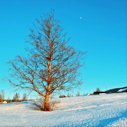 winter norway norwaynature freetoedit pctheblueabove