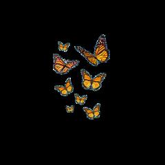 butterfly butterflies butterflyeffect butterflyaesthetic butterflywings freetoedit