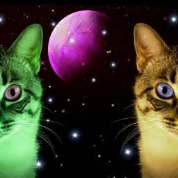 freetoedit animal cats art madewithpicsart