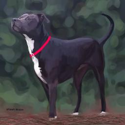 freetoedit digitalpainting mydog dogsofpicsart pitbull dcportraits