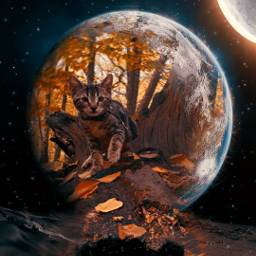 freetoedit cat surreality picsarteffects madewithpicsart