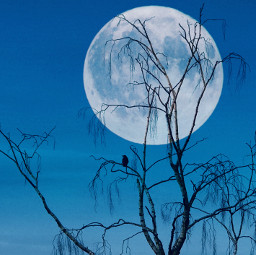 interesting nature sky moon freetoedit