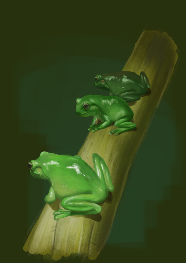 Frog Study this week🐸🥰 #digitaldrawing #2d #2ddrawing #digitalart #art #illustration #frogs #amphibians #krita #digitalartist #breakdown #creature #creatureart  #freetoedit
