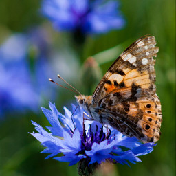 freetoedit photography butterfly flower colorful