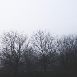 trees misty dramaeffect outandabout freetoedit
