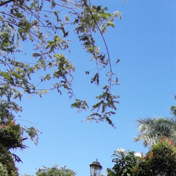 photography naturelover greenery original branches