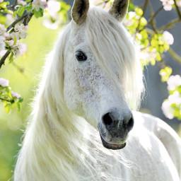 freetoedit horselove beautifulbirthmarks animaleye