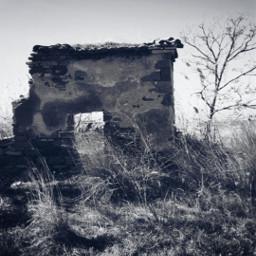 freetoedit naturephotography bnwphotography myclick