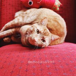 freetoedit mycat. catlovers petsandanimals mycat