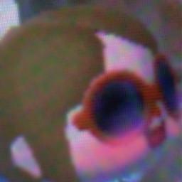 acnl animalcrossingnewleafwelcomeamiibo animalcrossing animalcrossingnewleaf blush