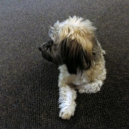 freetoedit dog myphoto photography woof