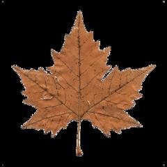 leaves leaf aesthetic fall autumn freetoedit
