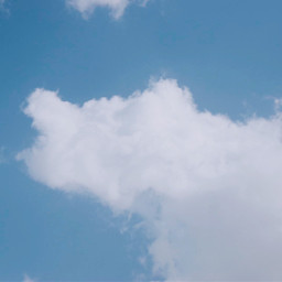 myphotography fox sky clouds blue freetoedit
