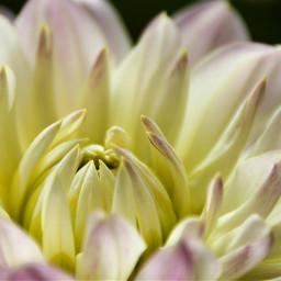 freetoedit flower naturephotography nature photography