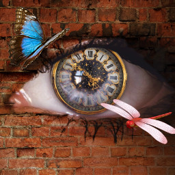 freetoedit watch butterfly dragonfly insect ircmysteriouseye mysteriouseye