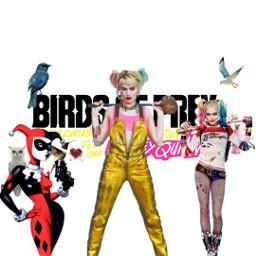 freetoedit harleyquinn ecbirdsofpreywhatwouldharleydo birdsofpreywhatwouldharleydo #WhatWouldHarleyDo #birdsofprey #HarleyQuinn #WarnerBros #MargotRobbie #BOP