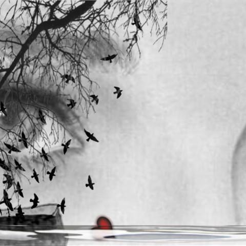 #eyes,#book,#bird,#selfie,#water,#srcbirds,#freetoedit