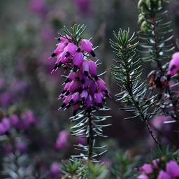 nature flowers outandabout freetoedit