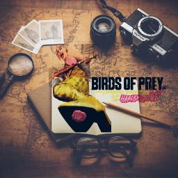 freetoedit brids birdsofprey share follow4follow