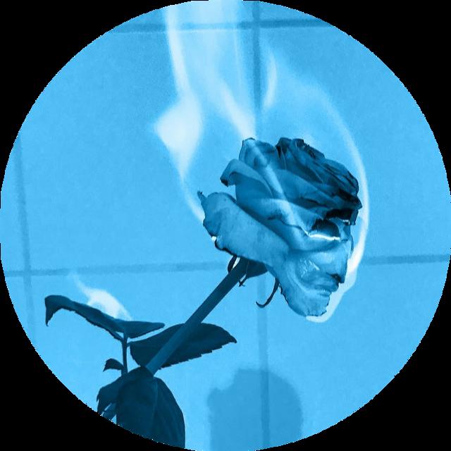 #bluerose #darkblueaesthetic #lightblueaesthetic #darkblue #darkbluerose #lightblue #lightblueaesthetic #blue #aesthetic #freetoedit