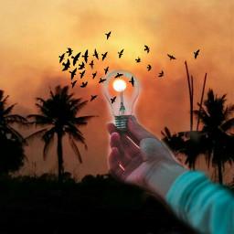 freetoedit srcbirds birdsvoted