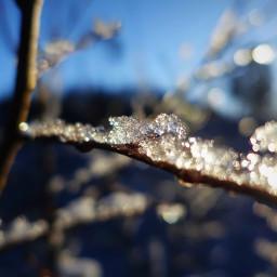 photography nature winter freetoedit