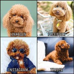 dog popular linkedin facebook instagram rcsocialpetworks socialpetworks freetoedit