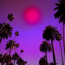 freetoedit palms palmtrees colorful colors myeditoffreetoedit
