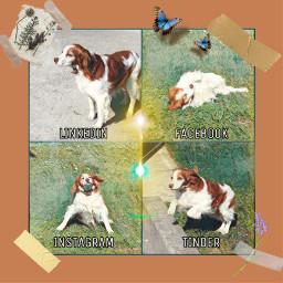 freetoedit dog cane challenge cute