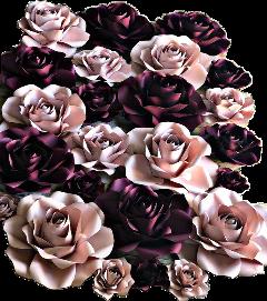 roses flowers background remixit burgandy freetoedit