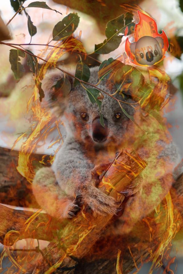 Help al to save the earth #savetheearth #savetheplanet #savethekoala #koala🐨 #australia #earth  #freetoedit