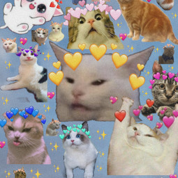 freetoedit cats heartcrown aesthetic college