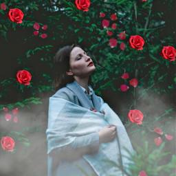 freetoedit woman mujer rosas petalos