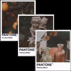 pantone aesthetic angel orange cute freetoedit