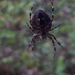 freetoedit photography spider closeup nature