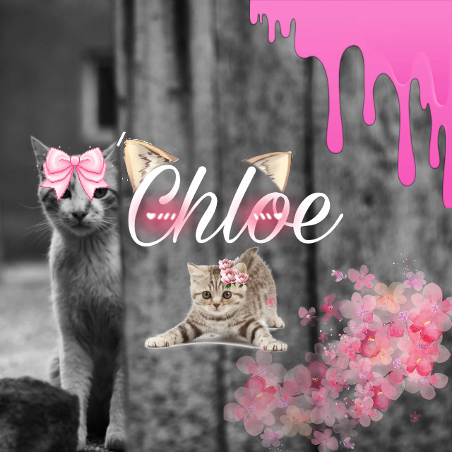 #freetoedit #cat #pink #nameeeit this if for a cat