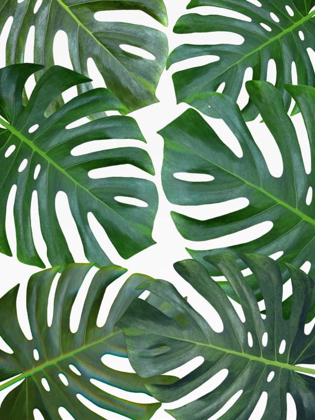#background #backgrounds #leaves #leave #tropical #araceliss  #freetoedit