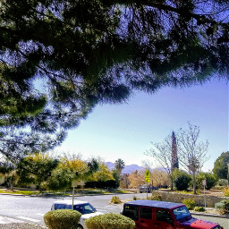 freetoedit winter urbanandstreet urbanshadows pinetrees